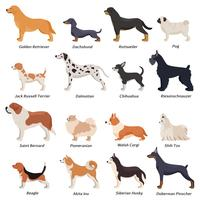 Conjunto de ícones de cães de perfil