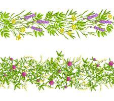 Ervas e flores silvestres sem costura padrão vetor