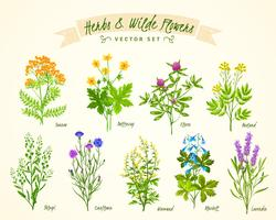 Ervas e conjunto de fundo de flores silvestres vetor