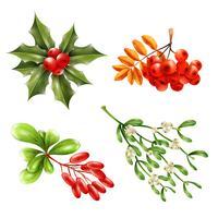 Conjunto de ramos de bagas de Natal vetor