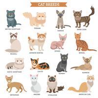 Conjunto de raça de gato vetor