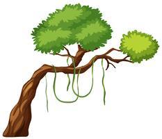 Um ramo de árvore no fundo branco vetor