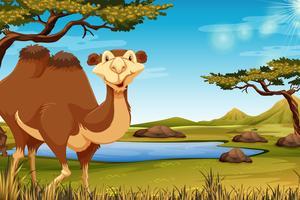 Um, camelo, em, savana vetor