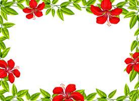 Um quadro flowr de hibisco vetor