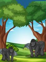 Gorila em estado selvagem vetor