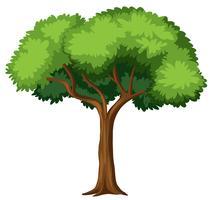 Árvore isolada no fundo branco vetor