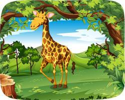 Uma girafa na floresta vetor