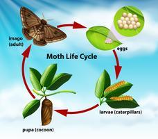 Um ciclo de vida da mariposa vetor