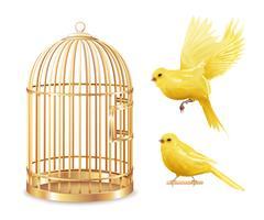 Conjunto de gaiola dourada canário