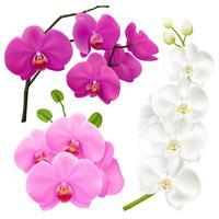 Conjunto colorido realista de flores de orquídea vetor