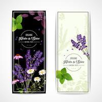 Banners de ervas com flores silvestres e especiarias vetor