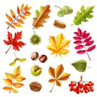 Conjunto de folhas de outono