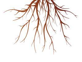 Raiz de árvore isolada ilustração vetor