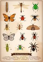Página do livro vintage de insetos vetor