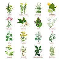 Ícones de ervas medicinais planas vetor