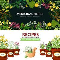 Banners de ervas medicinais vetor
