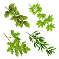 Ramos verdes de árvores de folha caduca vetor