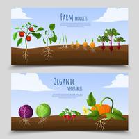 Banners horizontais de comida saudável vetor