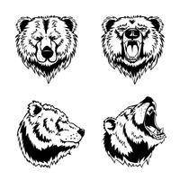 Cabeça de urso mão gravuras desenhadas vetor