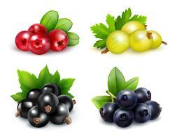Conjunto realista de cachos de frutos