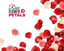 Fundo de pétalas de flores rosa vetor
