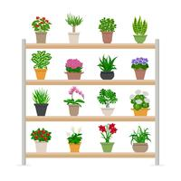 Plantas de casa na ilustração de prateleiras