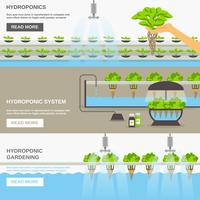Ilustração do sistema hidropônico vetor