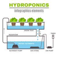 Ilustração hidropônica de infográfico vetor