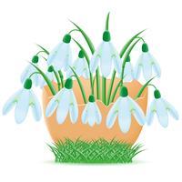 snowdrops estão em ilustração vetorial de casca de ovo vetor