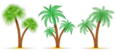ilustração em vetor palmeira