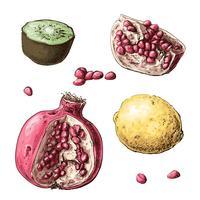 Definir frutas. Limão, granada, kiwi. Ilustração vetorial