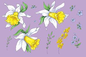 Conjunto de flores diferentes de Narciso. Esboço desenhado de mão. vetor
