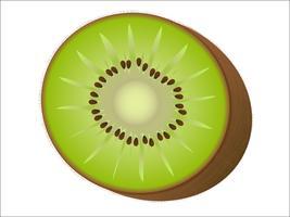 kiwi vetor