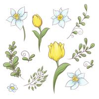 Conjunto de flores tulipas. Mão, desenho, vetorial, ilustração vetor