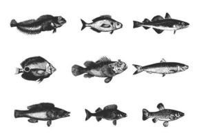Pacote de vetores de peixes gravados