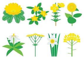 Pacote de vetores de flores amarelas