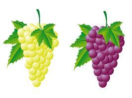 uvas brancas e vermelhas vetor