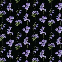 lavanda roxa botânica em preto