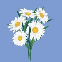 Buquê de flores. Quadro floral. Cartão de florescer. Flores desabrochando isoladas no fundo vetor
