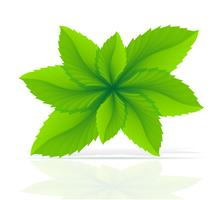 ilustração abstrata do vetor de folhas de hortelã