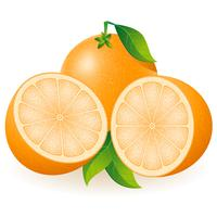 ilustração vetorial laranja