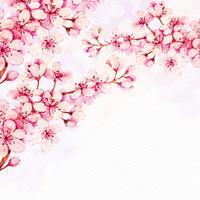 Flor de cerejeira vetor