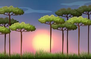 Cena natureza ao pôr do sol vetor