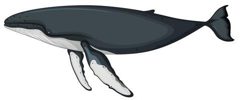 Um, baleia, personagem, branco, fundo vetor