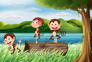 Três macacos se divertindo vetor