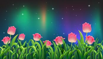 Tulipa rosa no jardim à noite vetor
