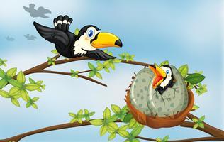 Aves de Tucano no ninho vetor