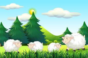 Ovelhas que vivem no pátio