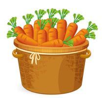 Cenoura em cestaria