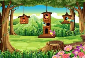 Cena parque, com, pássaros, em, birdhouse vetor